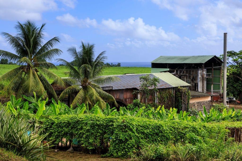 Voir les distilleries de Guadeloupe
